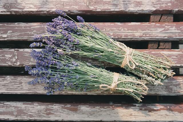 natural healing herbs - lavender