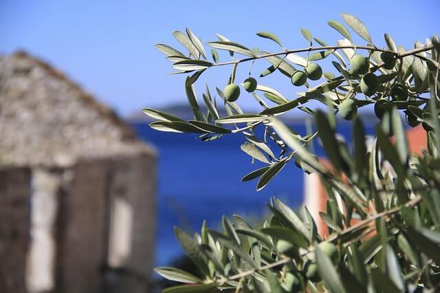 olive leaf oil